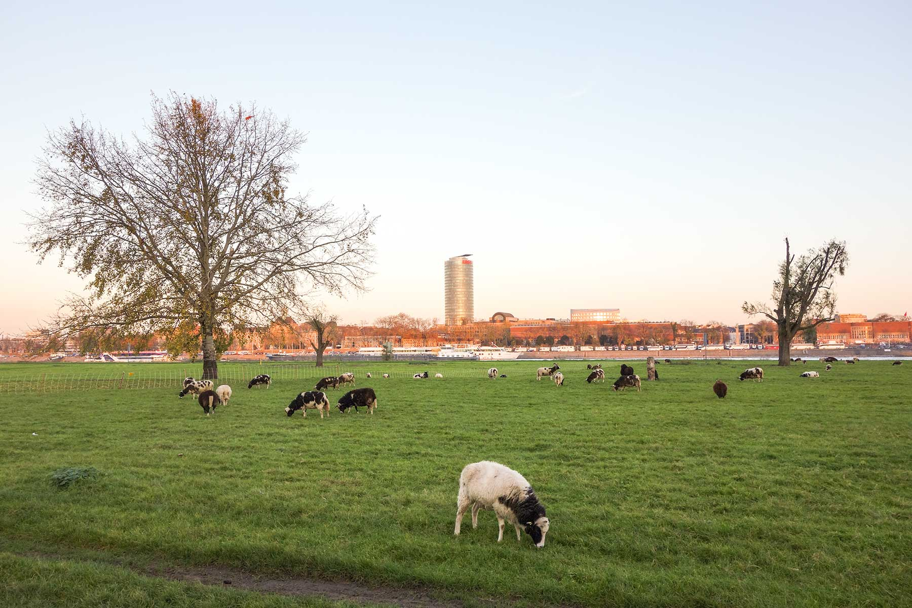 Pastures Along the Rhine, Düsseldorf